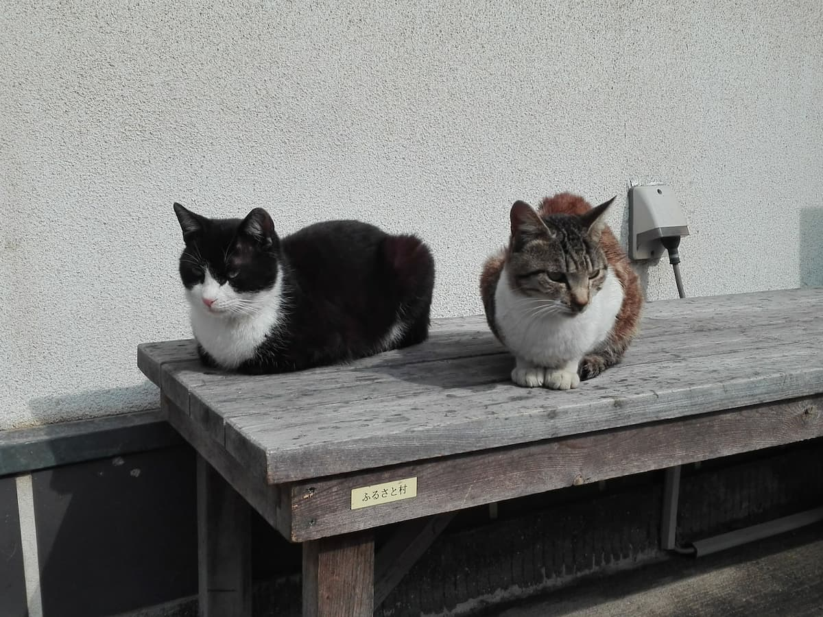 cats-on-the-bench