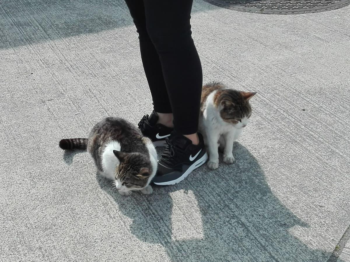 cats-coming-close