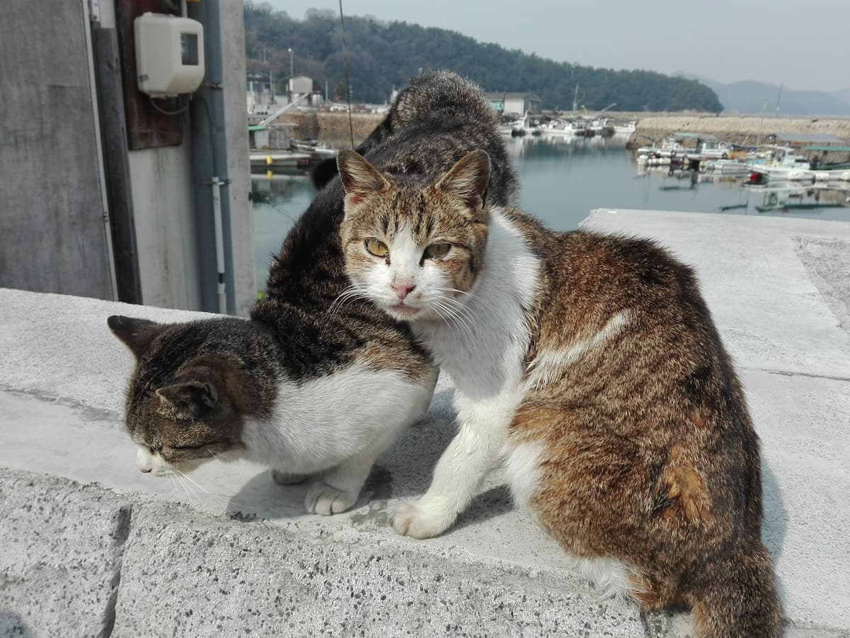 cats-on-the-embankment