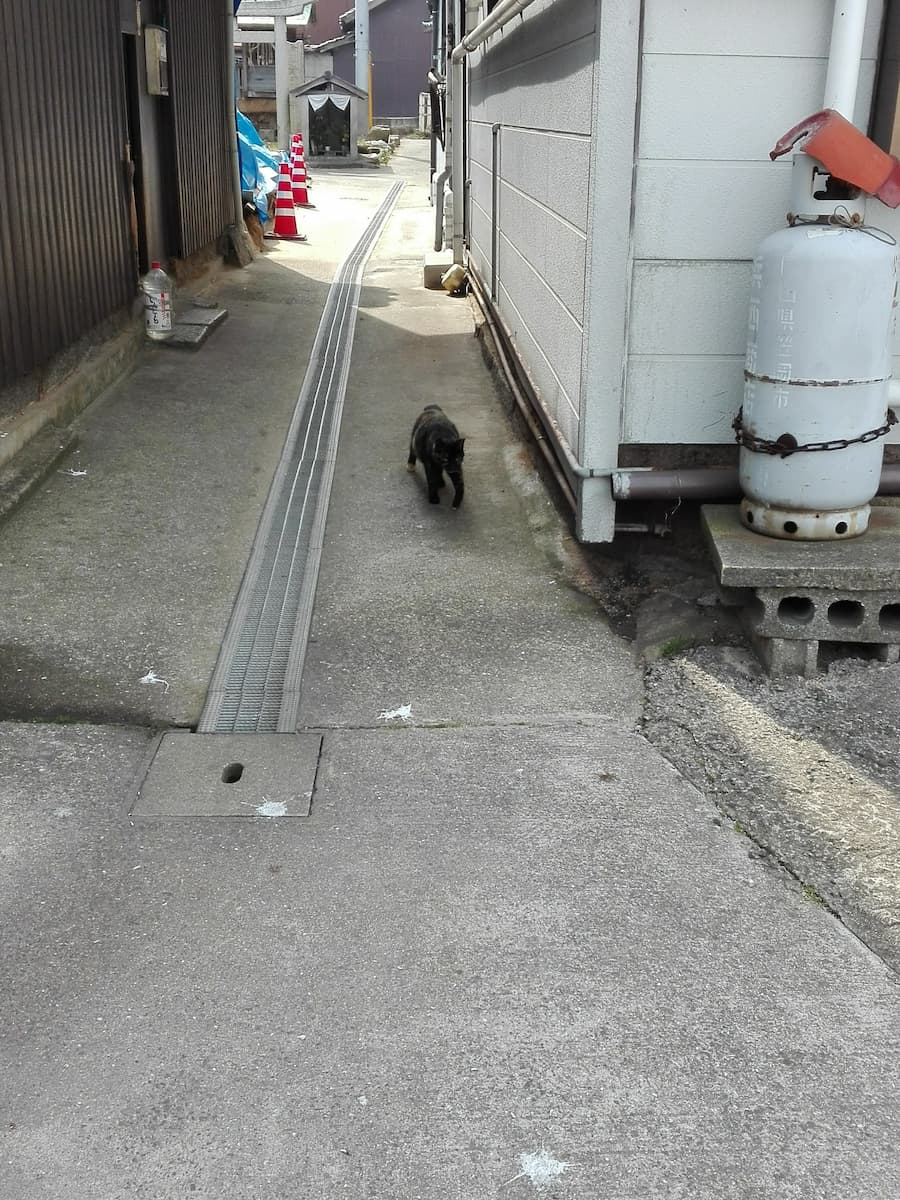 cat-coming-from-the-alley