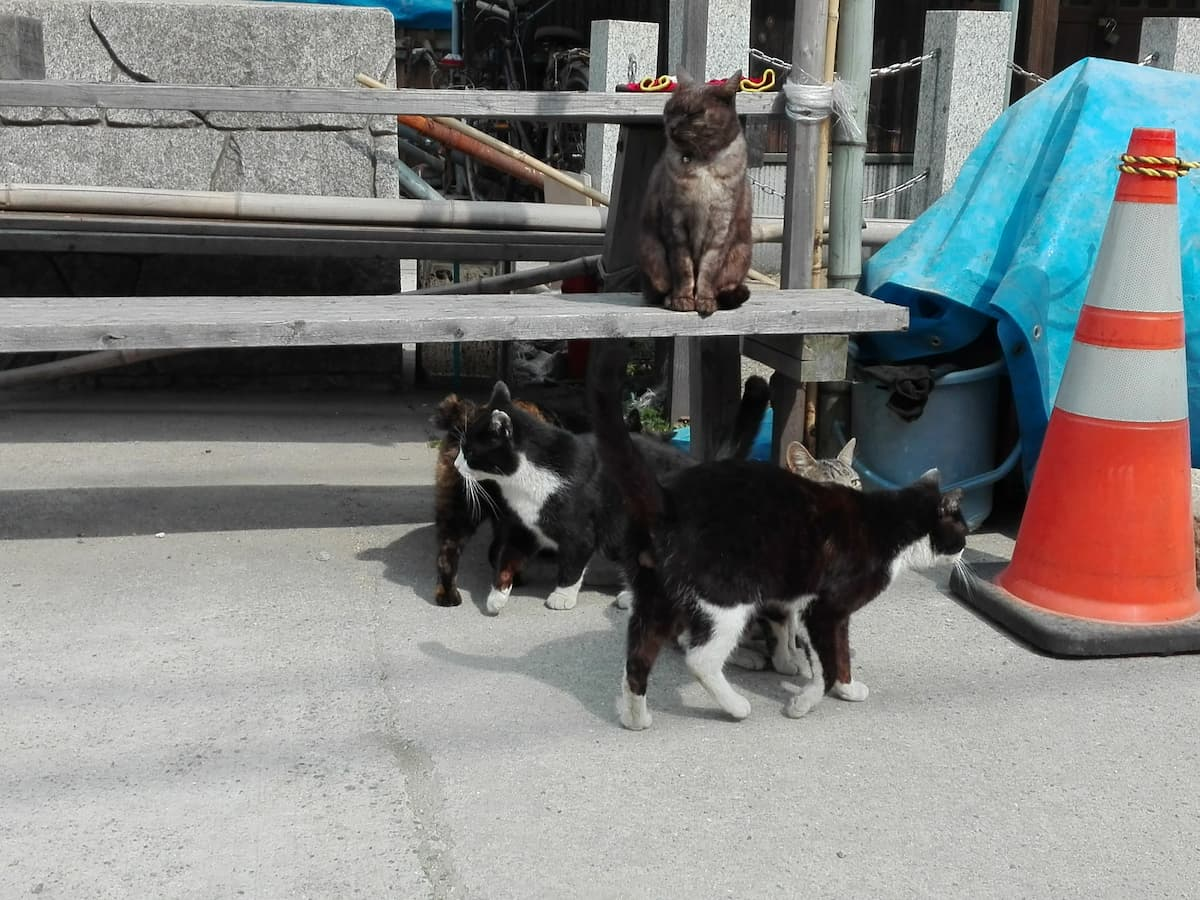 cats-gathering