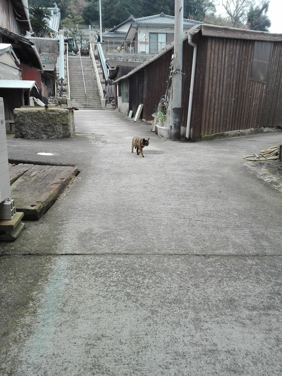 cat-coming-from-the-temple
