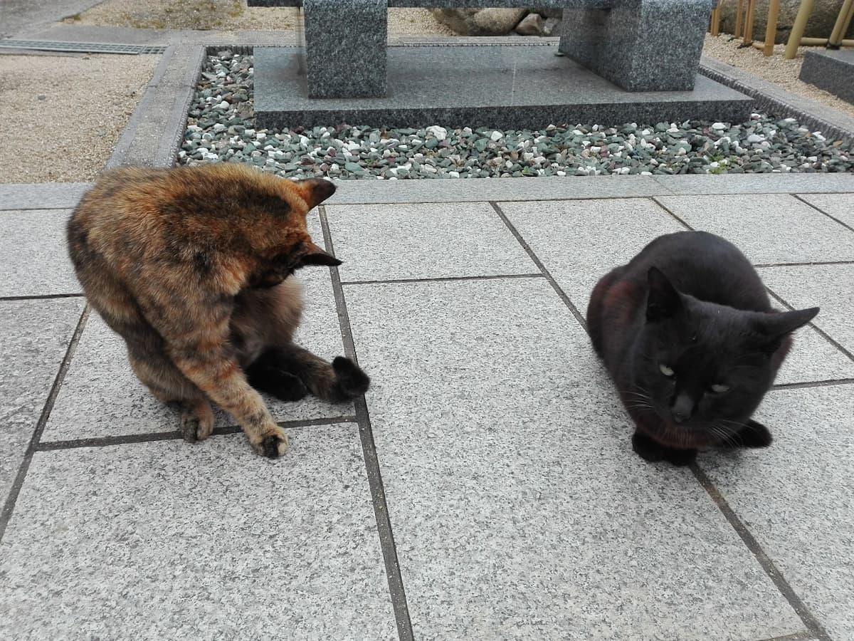 tortoiseshell-cat-and-black-cat