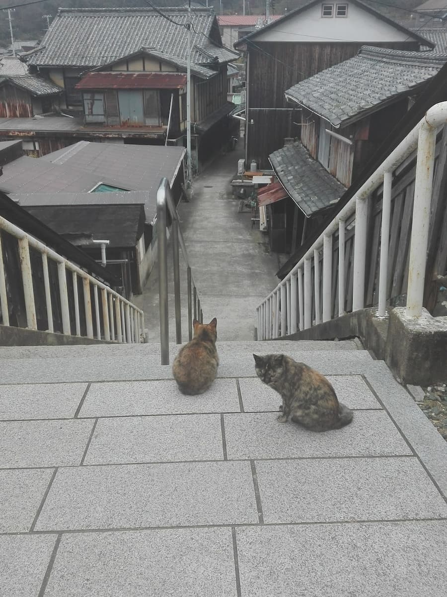 cats-sitting-on-the-stairs