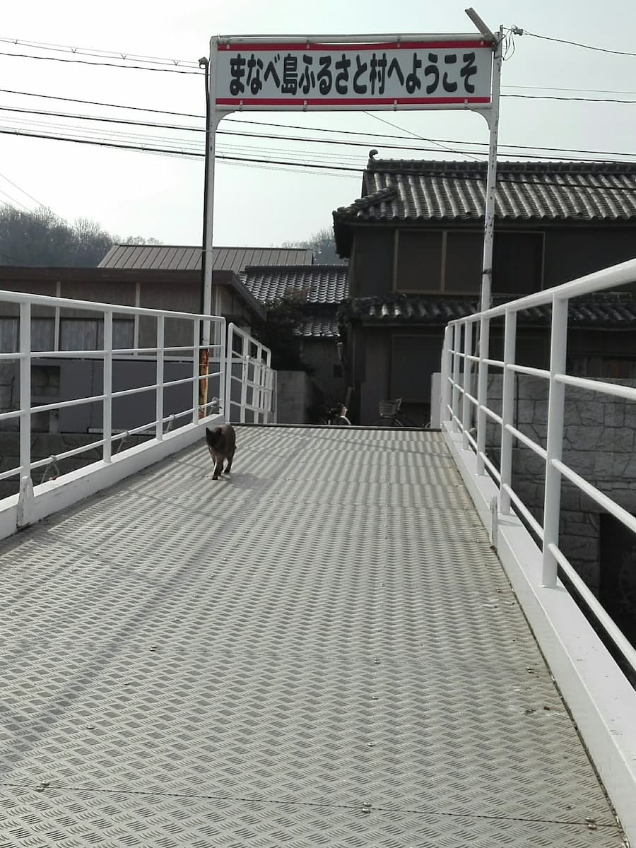 manabeshima-cat-welcoming