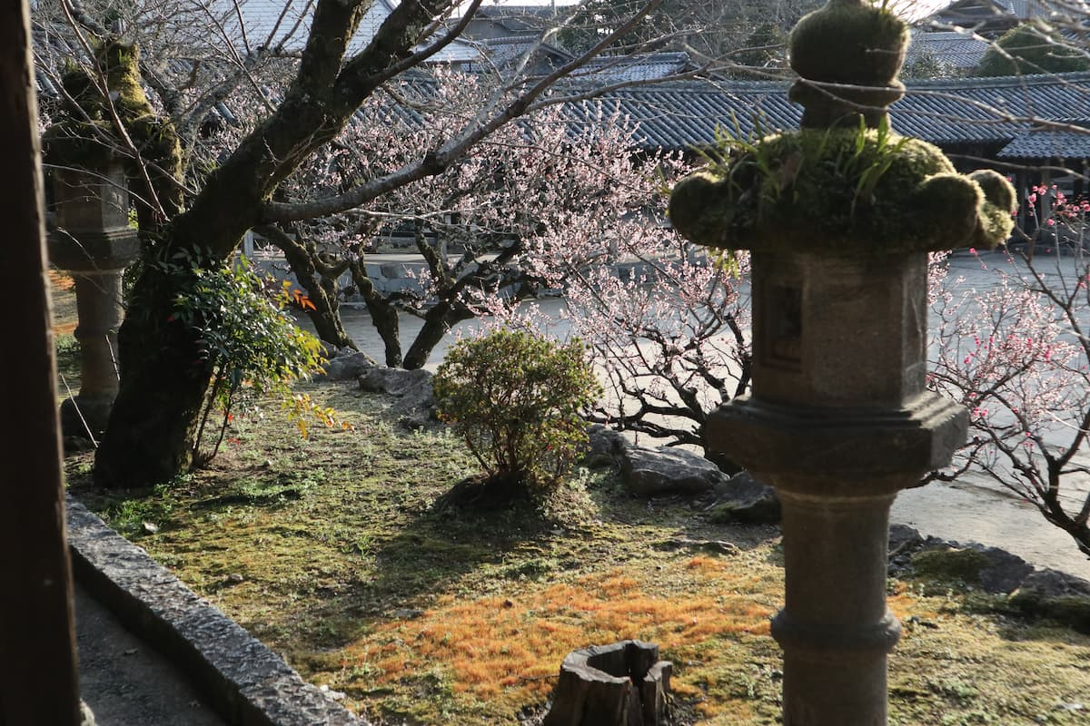 stone-lantern-and-plum-trees