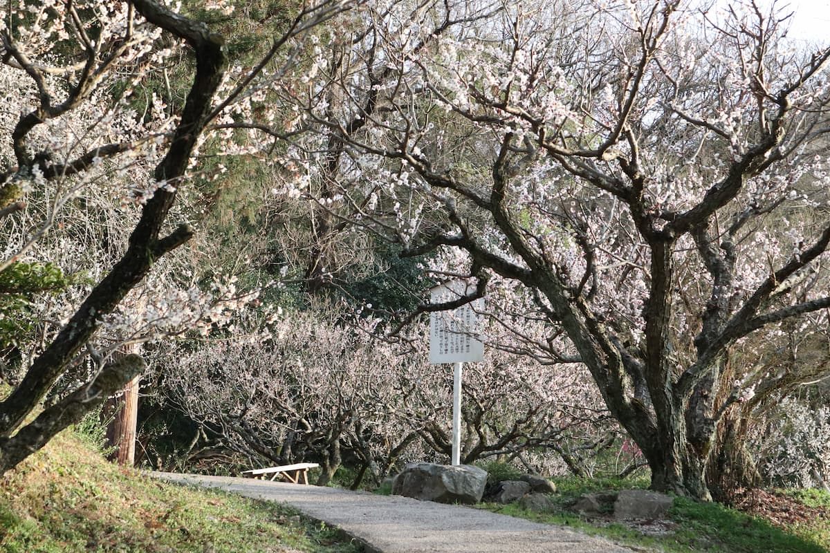 plum-grove