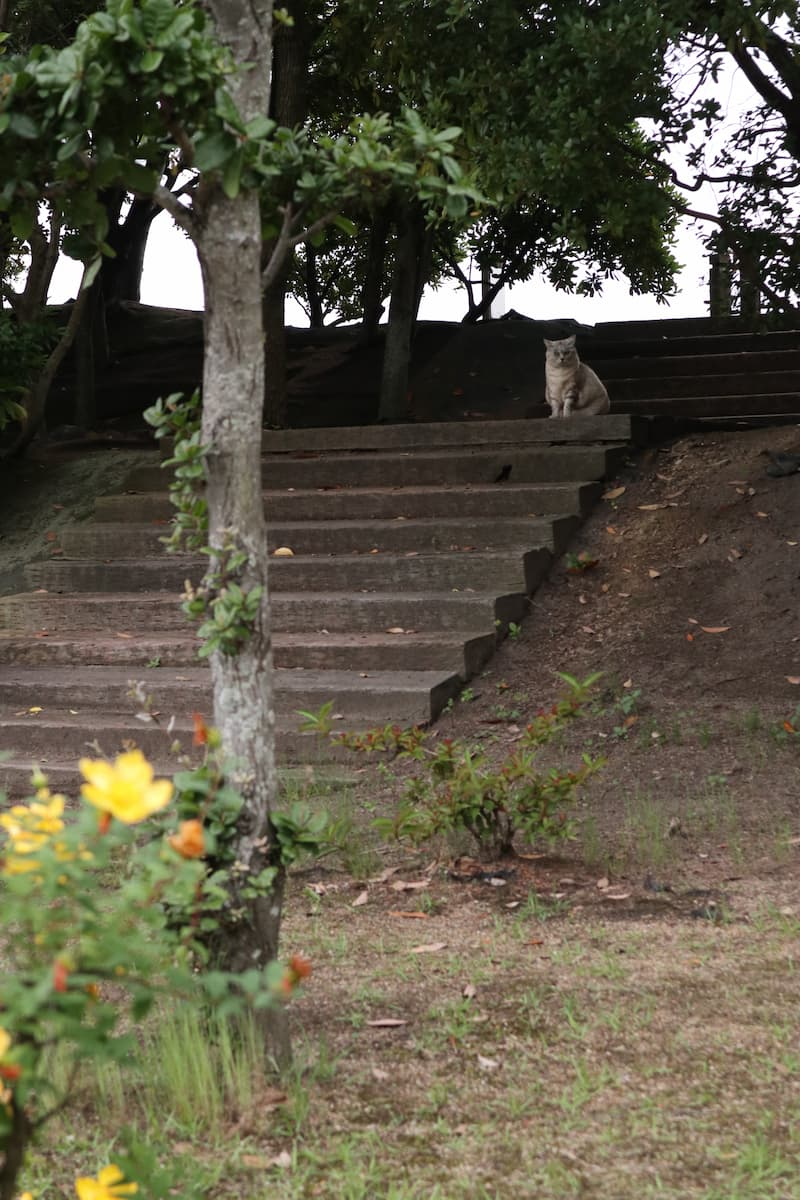 cat-on-the-steps