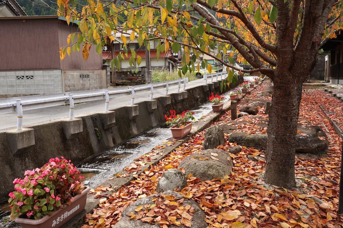 三朝温泉の紅葉した街路樹