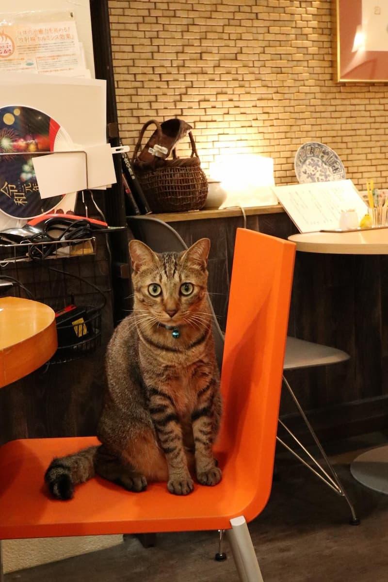喫茶店の猫