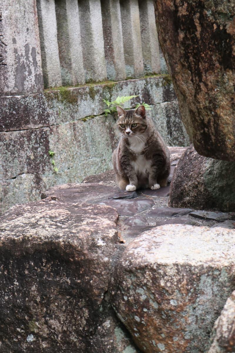 石の上に座る猫