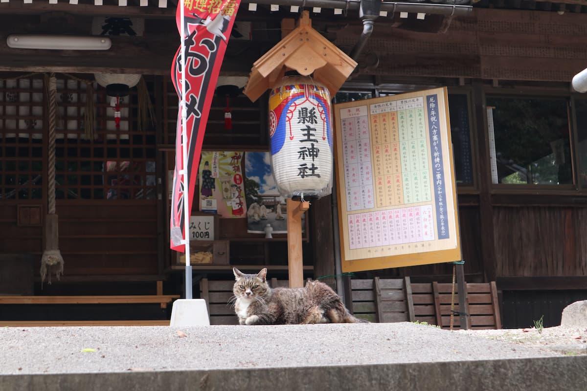 本殿の前で座っている猫