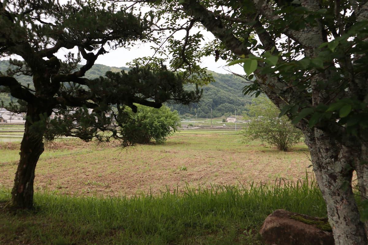 縣主神社近くの田園風景