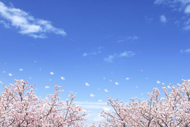 f:id:yukimi-site:20200328141033j:plain
