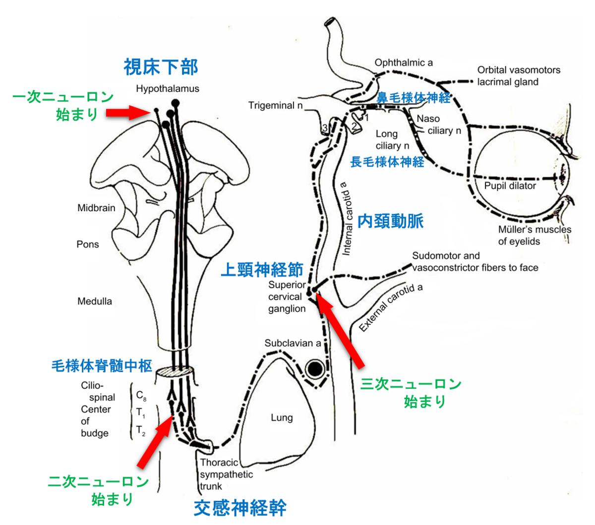f:id:yukimukae:20190730220331p:plain