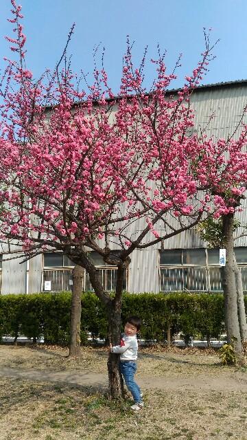 f:id:yukincomama:20170319142419j:image