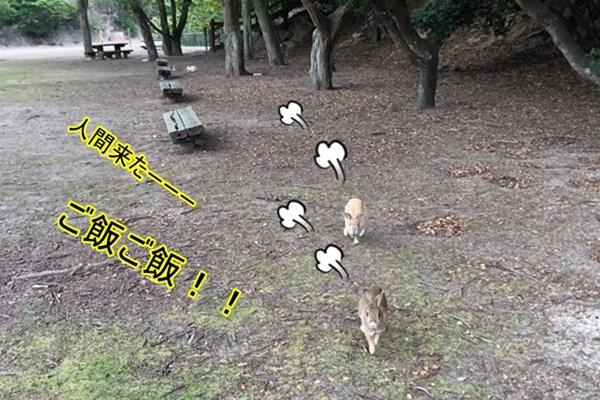 f:id:yukinekokei:20190602204822j:plain