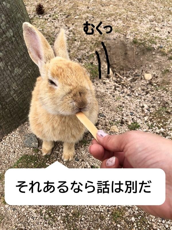 f:id:yukinekokei:20190603010441j:plain