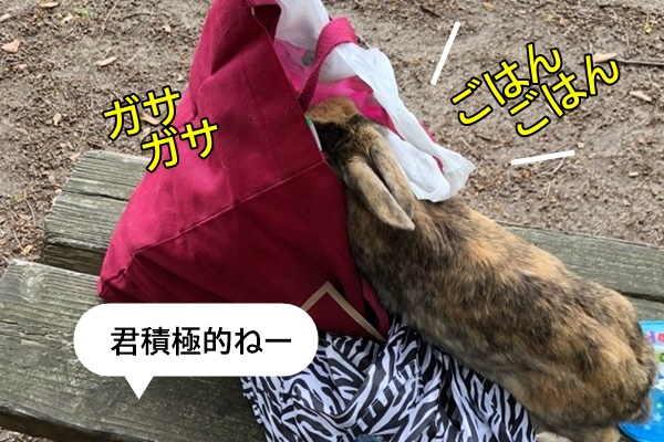 f:id:yukinekokei:20190603113011j:plain