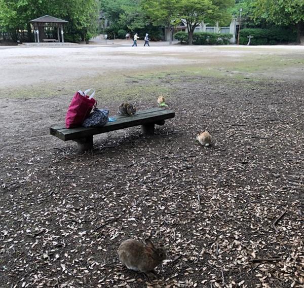 f:id:yukinekokei:20190603113452j:plain