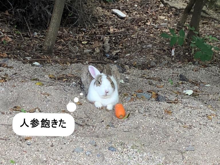 f:id:yukinekokei:20190603144958j:plain