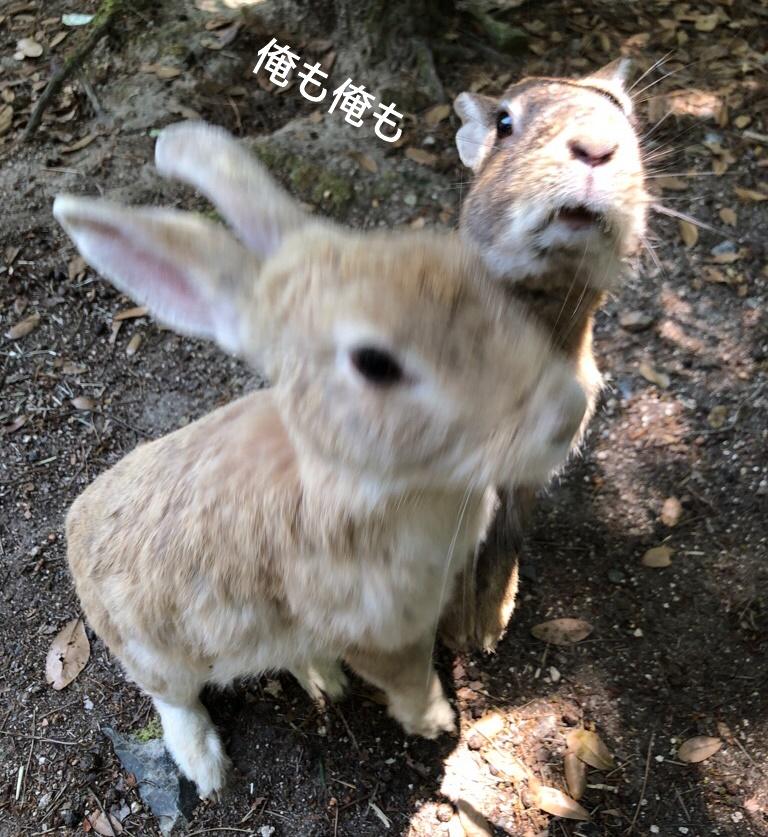 f:id:yukinekokei:20190609125606j:plain