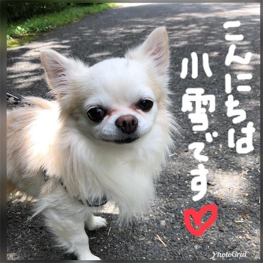 f:id:yukinekokei:20190726230733j:image