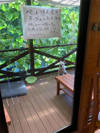 f:id:yukinekokei:20190729203017j:image