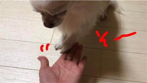 f:id:yukinekokei:20190824231347j:plain