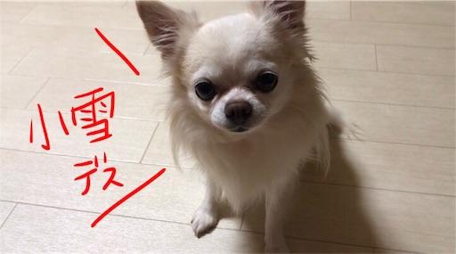 f:id:yukinekokei:20190824232308j:plain