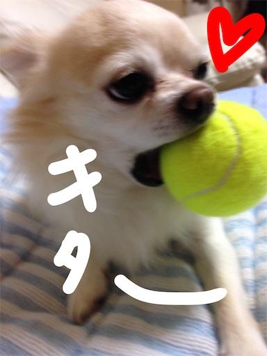 f:id:yukinekokei:20190827122803j:image