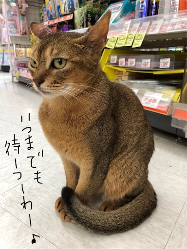 f:id:yukinekokei:20190830122506j:image