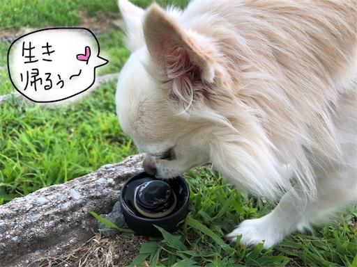 f:id:yukinekokei:20190929132541j:image
