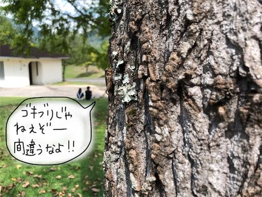 f:id:yukinekokei:20190929200712j:image