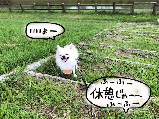 f:id:yukinekokei:20190929205200j:image