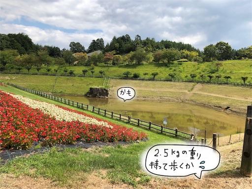 f:id:yukinekokei:20190929210448j:image