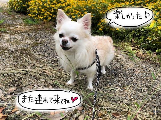 f:id:yukinekokei:20190929212141j:image