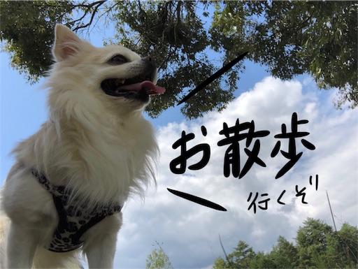 f:id:yukinekokei:20190929214115j:image