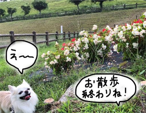 f:id:yukinekokei:20190929214929j:image