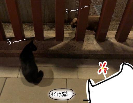 f:id:yukinekokei:20191017125420j:image