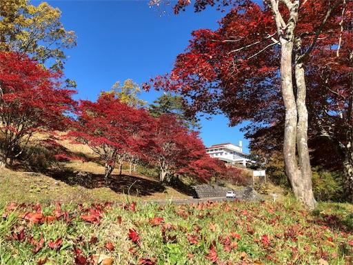 f:id:yukinekokei:20191105220938j:image