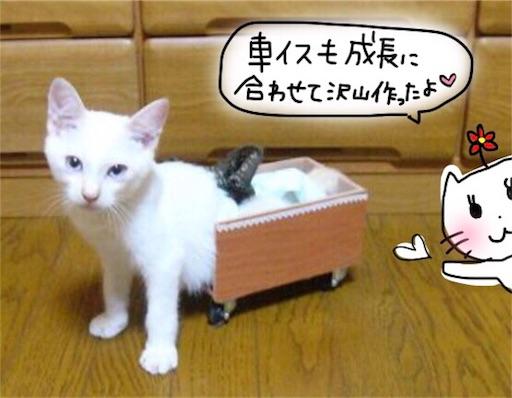 f:id:yukinekokei:20191114194751j:image