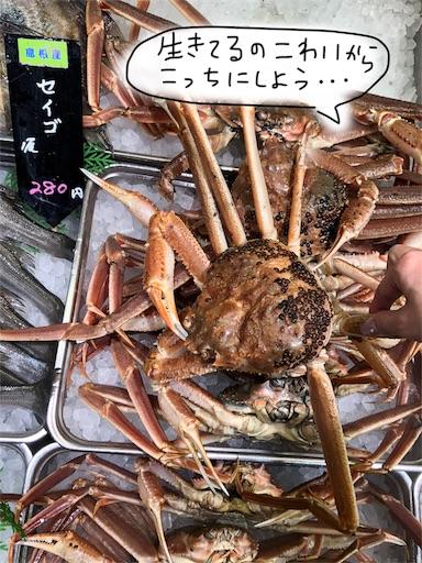 f:id:yukinekokei:20191119213552j:image