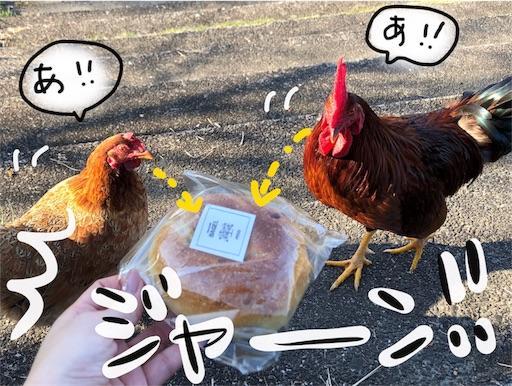 f:id:yukinekokei:20191203131442j:image