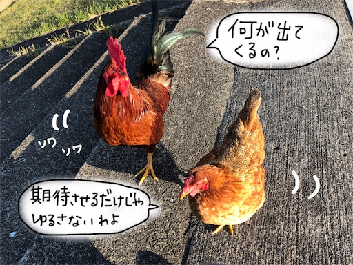 f:id:yukinekokei:20191203131444j:image