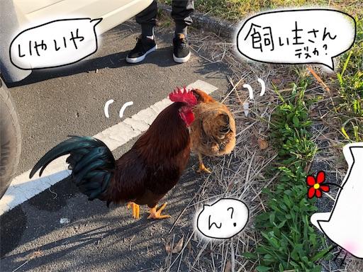 f:id:yukinekokei:20191203131447j:image