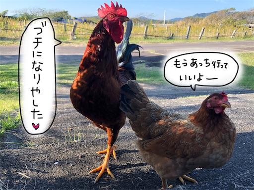f:id:yukinekokei:20191203131453j:plain