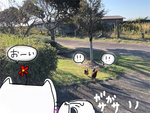 f:id:yukinekokei:20191203131730j:image