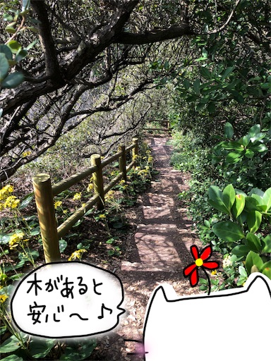 f:id:yukinekokei:20191209214537j:image
