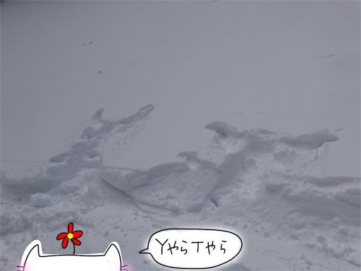 f:id:yukinekokei:20200222155121j:image